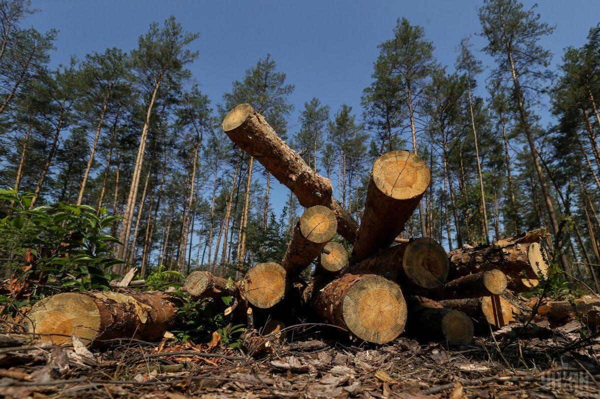 В этом году будет выделено 20 млн грн / фото УНИАН, Владимир Гонтар