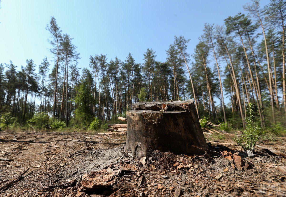 В Украине стали меньше рубить лес / фото УНИАН