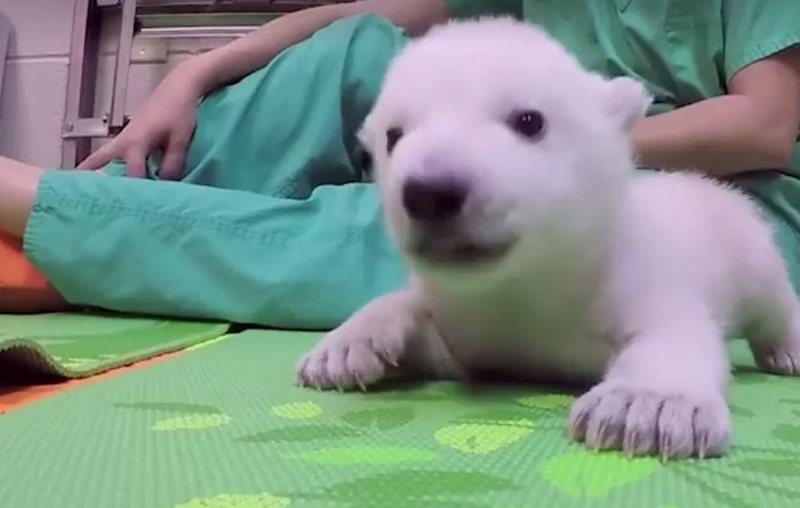 Відео показує 83 дні життя тварини / скріншот