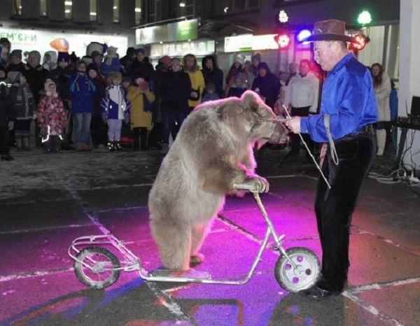 Ведмедиці більше не потрібно буде працювати у