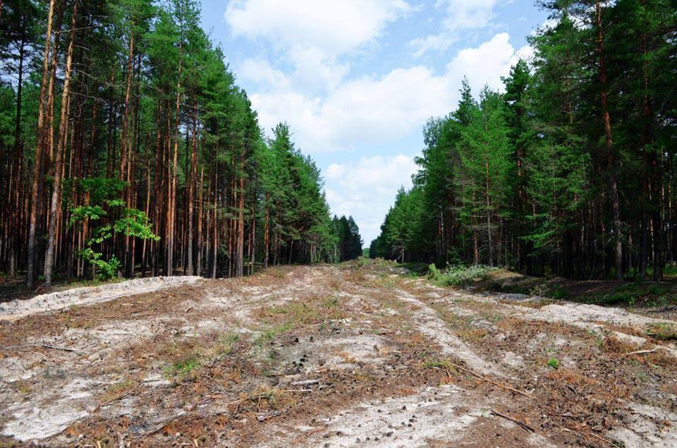 У лісах зони відчуження створюють «протипожежні розриви»