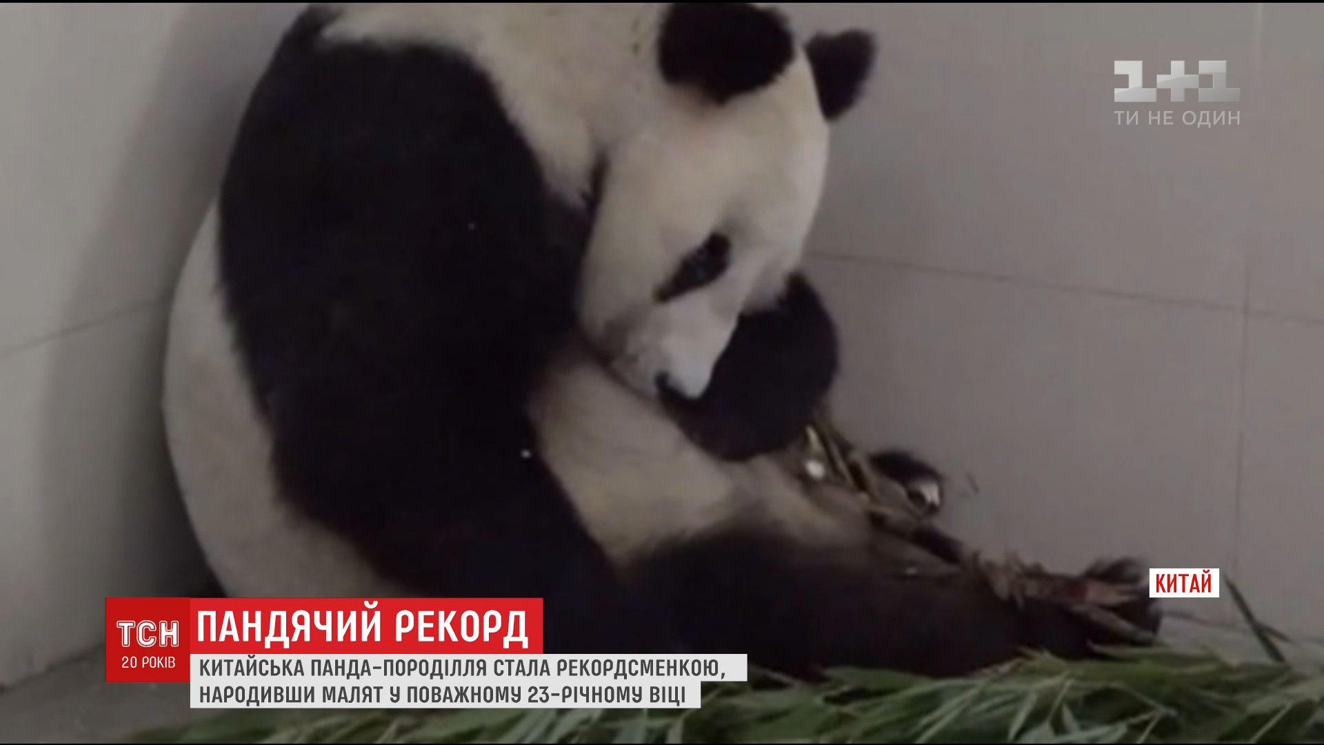 Пополнение в китайском зоопарке / скриншот ТСН
