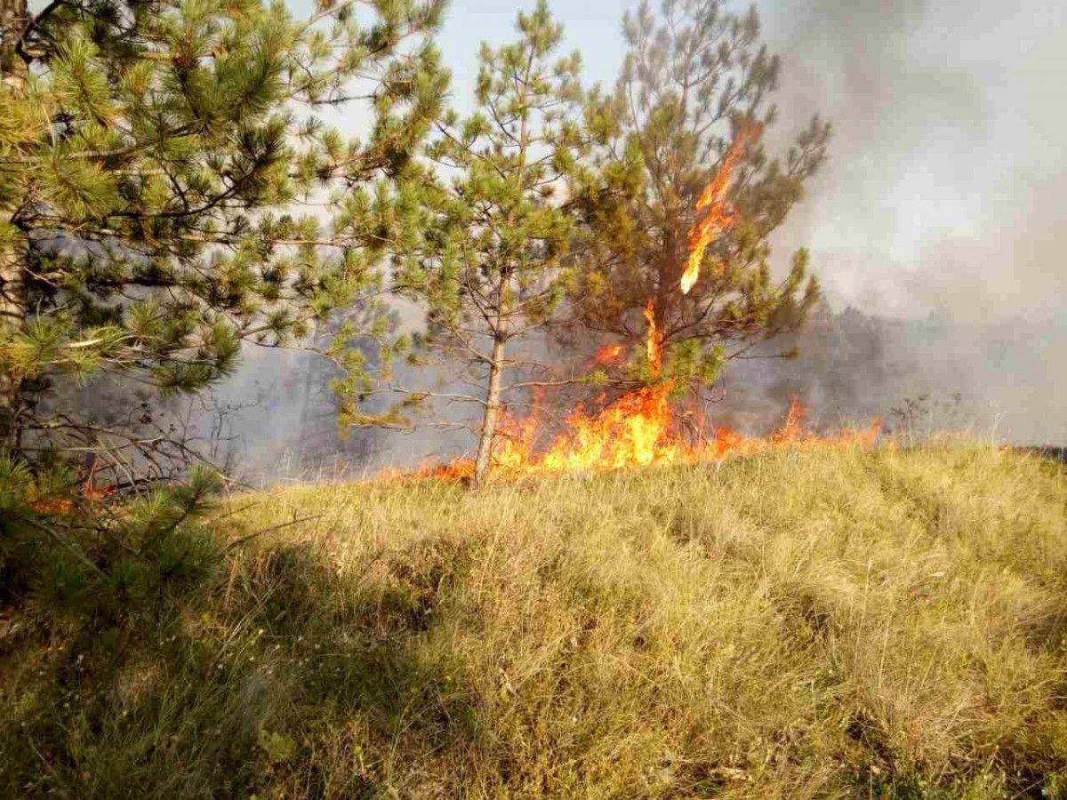 В Одесской области стал лесной пожар / ГСЧС