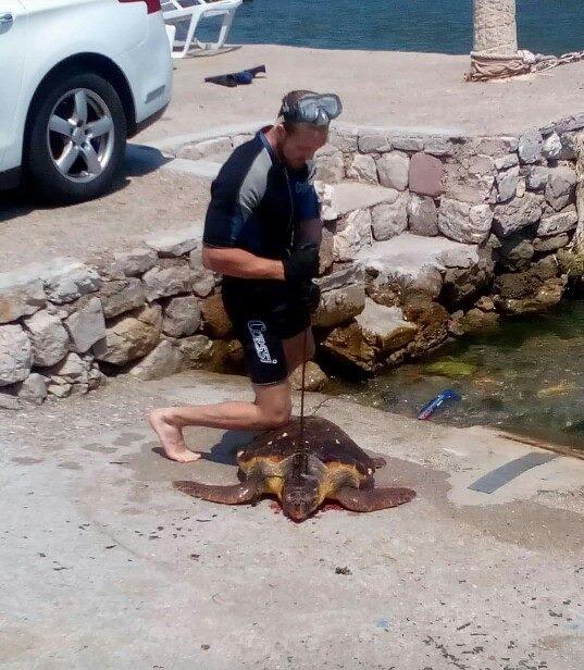 Чоловік убив морську черепаху / фото Podgoricki vremeplov
