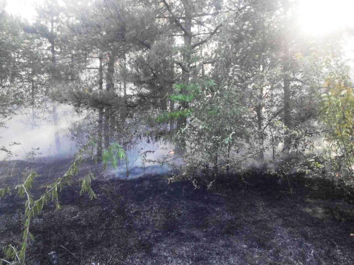 В Запорожской области произошел лесной пожар / ГСЧС