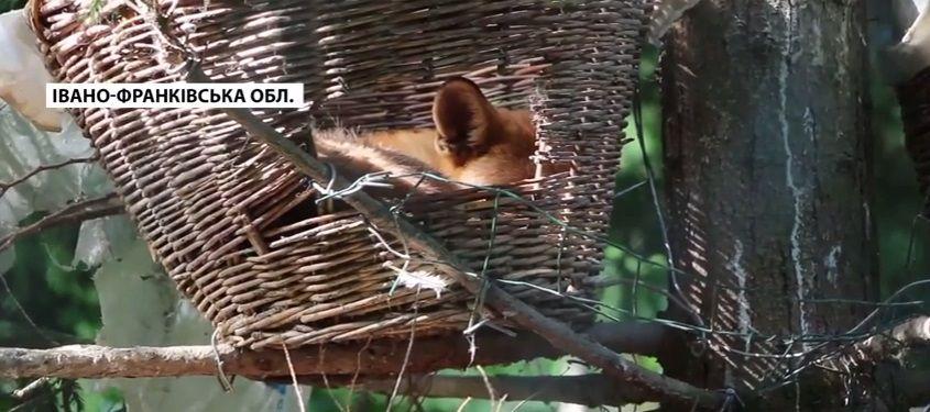 Тварини оселилися у гніздах / Скріншот
