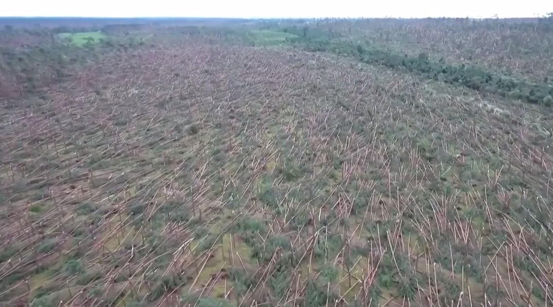 Буря знищила кілька гектарів лісу / Скріншот