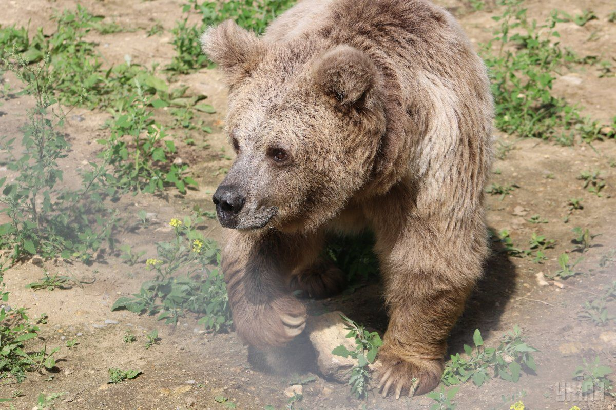 Медведи очень любят рыть себе берлоги / фото УНИАН
