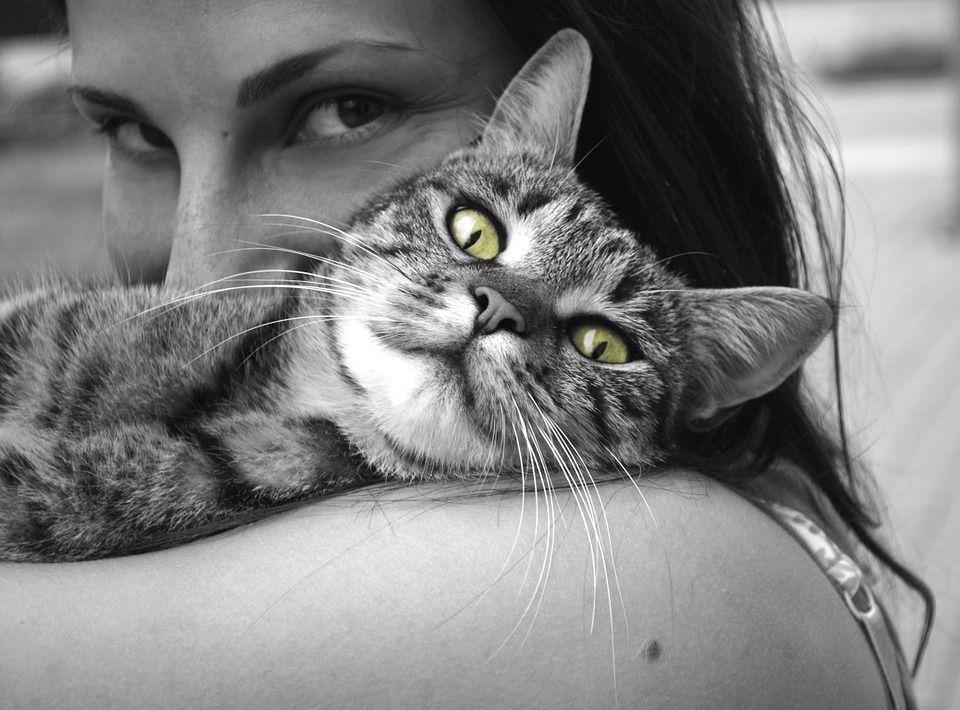 4 октября - Всемирный день защиты животныхpixabay.com