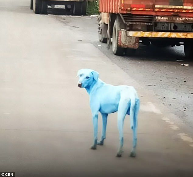 Ранее белые собаки поголубели / фото CEN