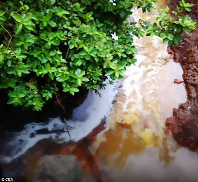 Река, где купаются животные / фото CEN