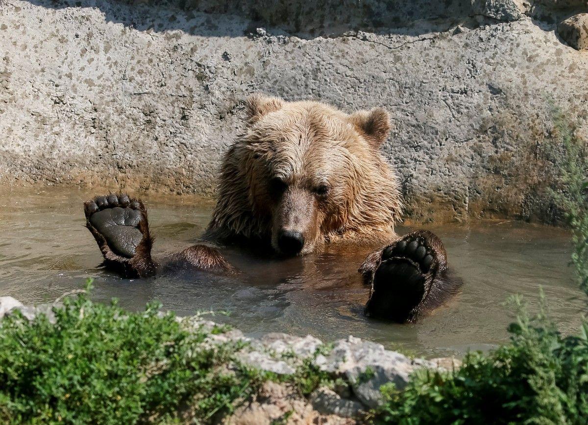 Пьяный секс с медведем