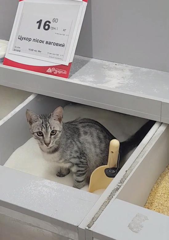 Котик в ящике с сахаром / Скриншот