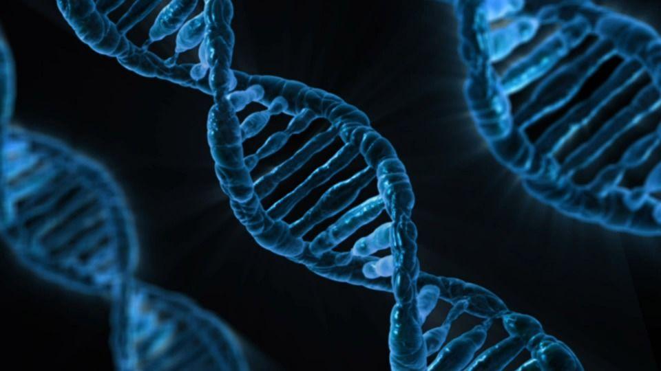 В 1953 году была представленаструктурнаямодель ДНК - двойнаяспираль / фото pixabay.com