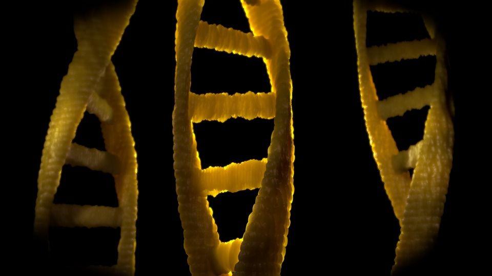 Ученые описали первичную структуру Х-хромосомы человека / Фото pixabay.com