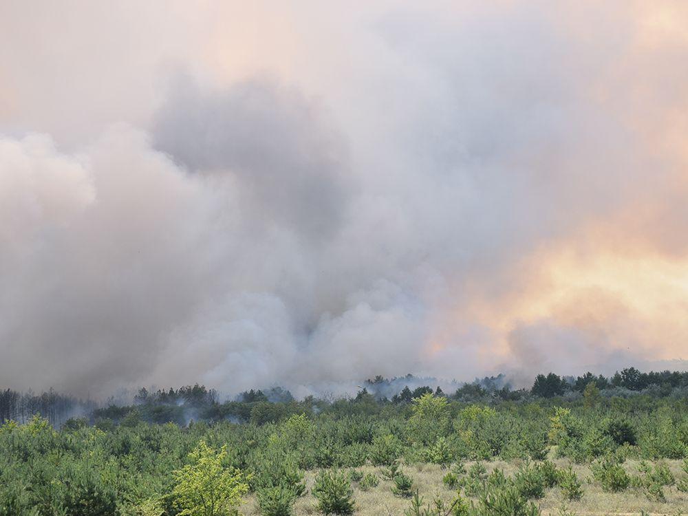 Миколаївщина. Загасили лісову пожежу площею майже 80 гектарів