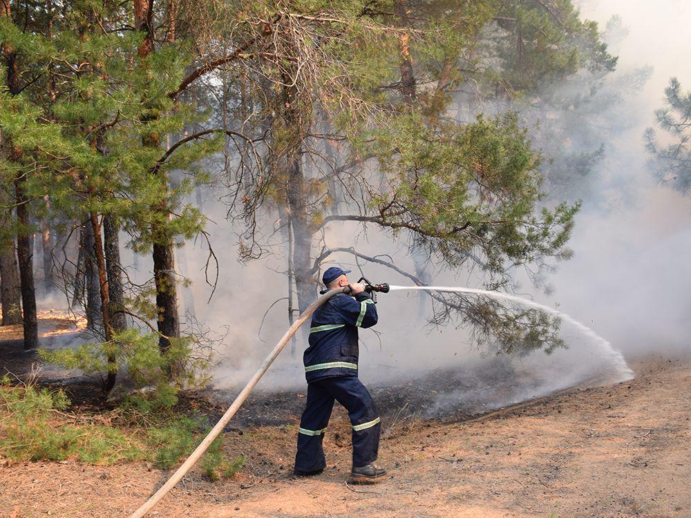 В Николаевской области горел 80 га леса / фото ГСЧС