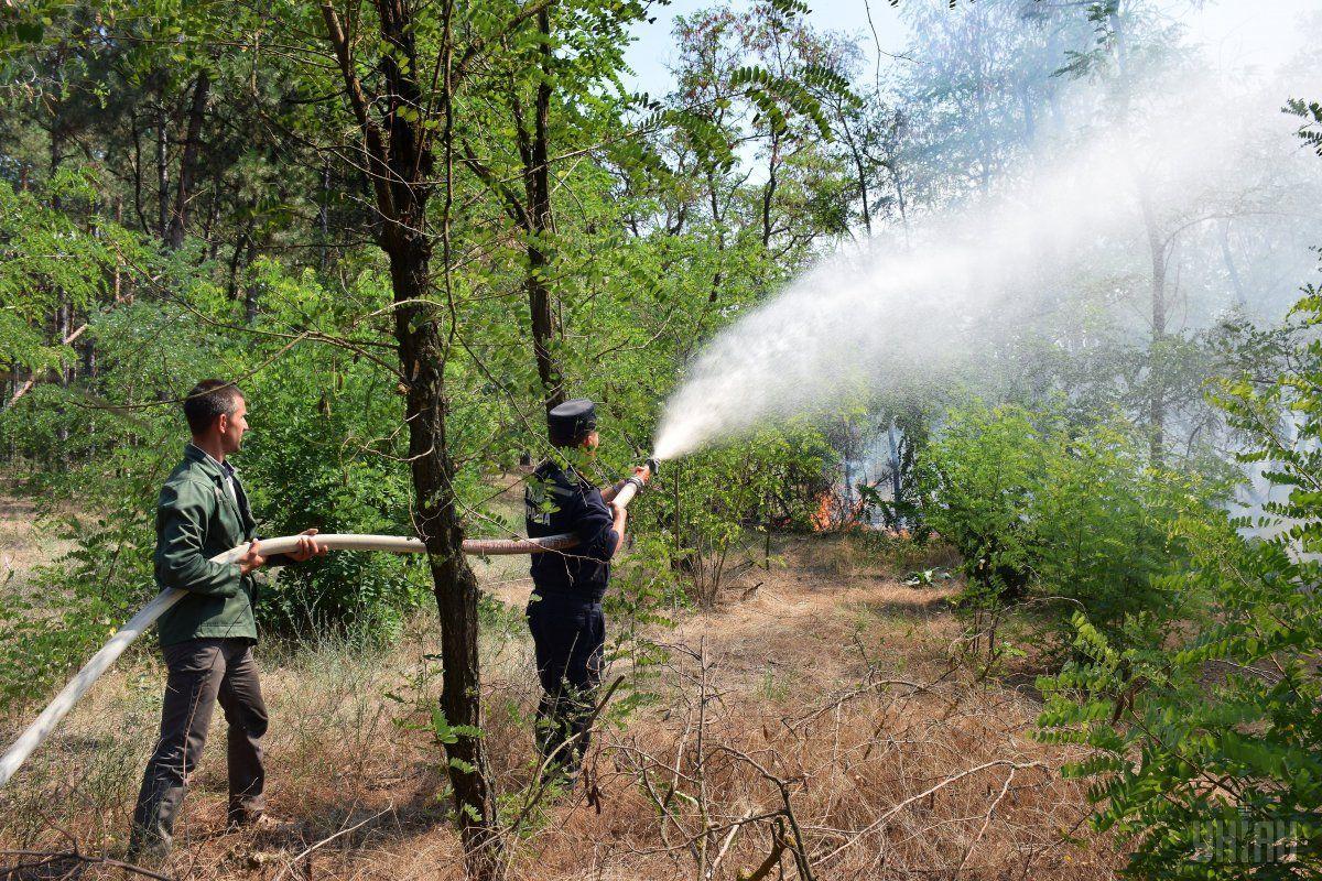 На данный момент распространение огня остановлено / фото УНИАН