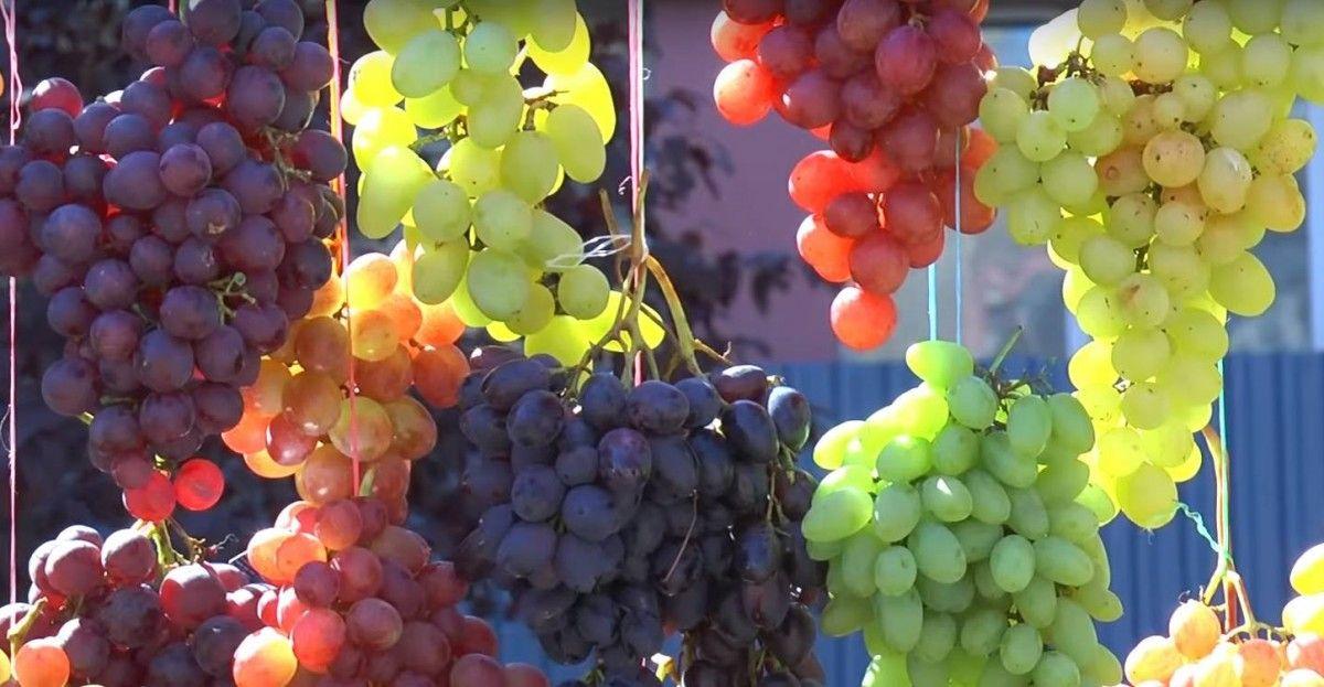 В Одеській області підпалили виноградники французького винороба / фото vezha.org