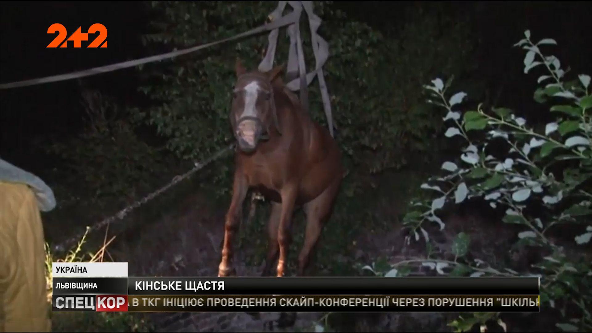 sport.unian.ua Біля Львова рятувальники врятували коня 03252c0bbd7a7