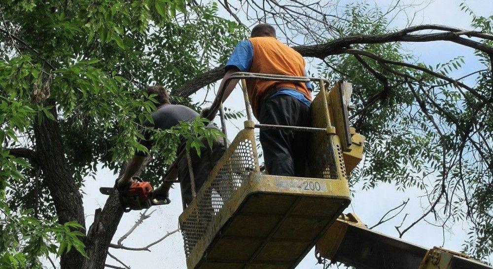 На Тернопільщині внаслідок негоди дерево впало на житловий будинок (3.38 22) 24821a2a4632b