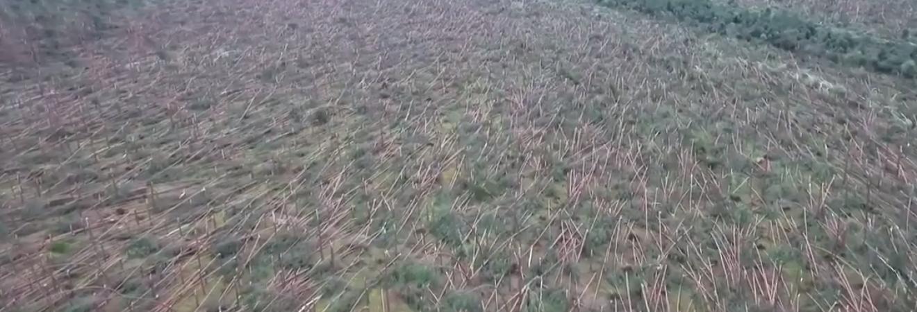 Деревья ломались, как спички: в Польше пронесся ураган, есть погибшие (видео)
