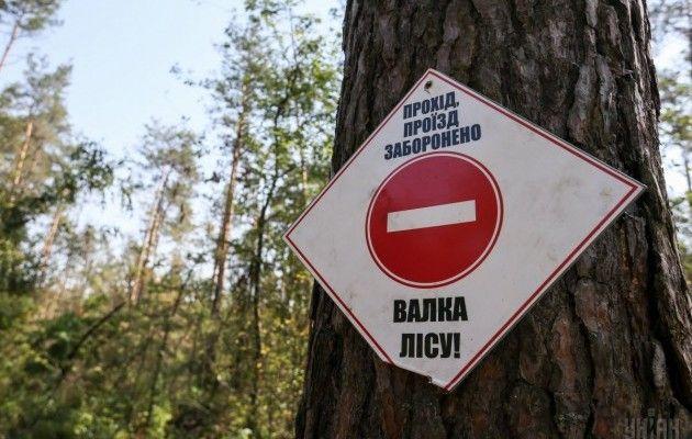 Як знищується «золотий» ліс в Пущі-Водиці