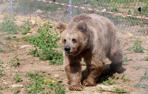 Львівщина. Будують притулок для бурих ведмедів «Домажир»