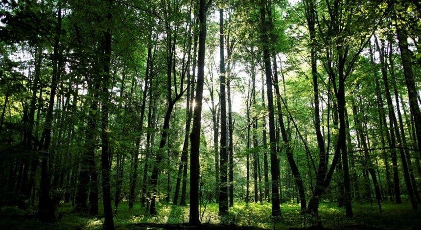Вчені пропонують посадити трильйон дерев для боротьби з глобальним потеплінням