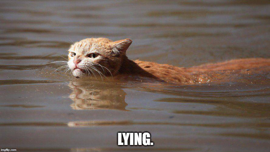 Кот стал знаменитостью / Фото twitter.com/LaurieTheScott