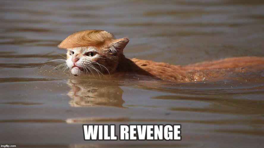 У кота обнаружилось сходство с Трампом / Фото twitter.com/alexeykolpikov