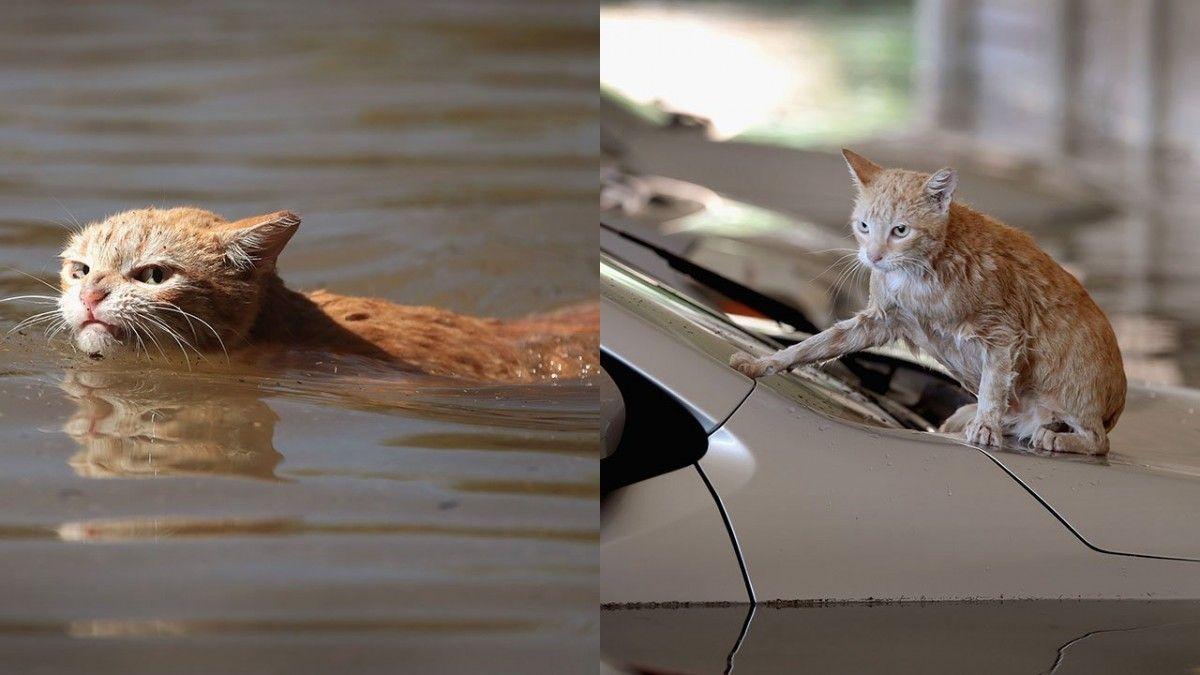 Кот выбрался из воды / KPRC 2