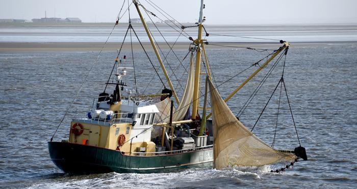В Северном море становится меньше трески / фото dpa