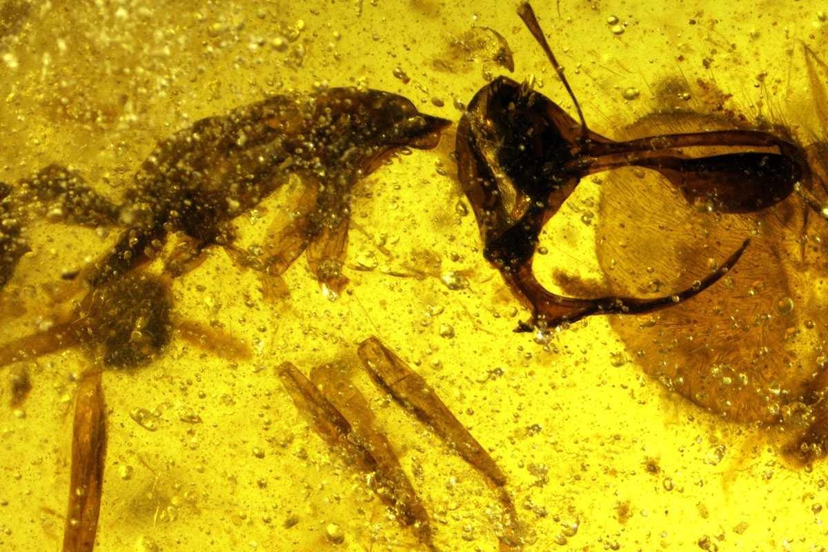 Описан новый вид муравьев / фото naked-science.ru