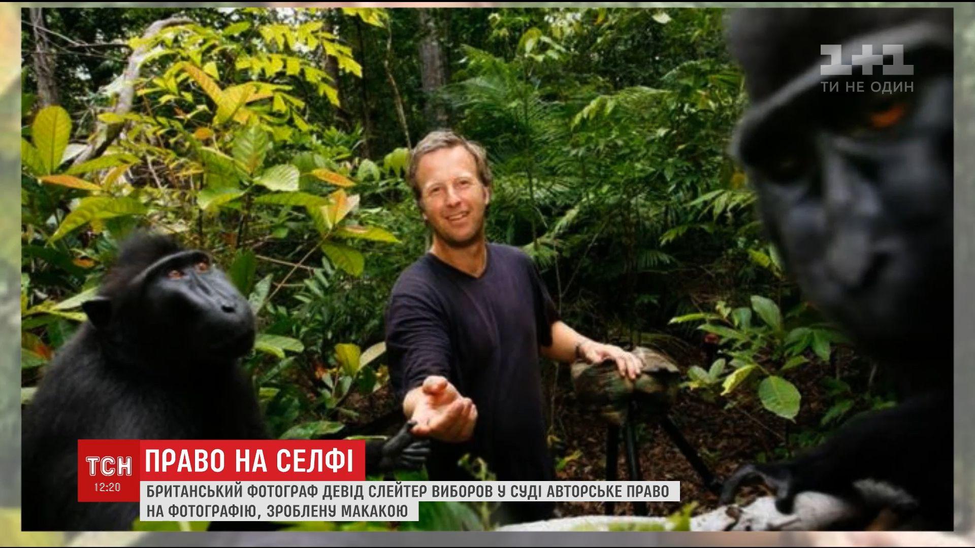 Фотограф доказал свое право на фото, сделанное животным / Кадр из видео ТСН