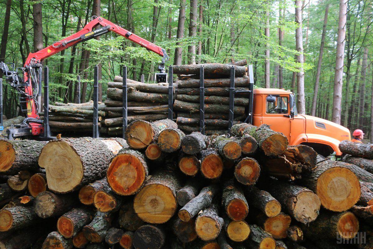 """Хто заробляє на українському """"чорному"""" лісі / фото УНІАН"""