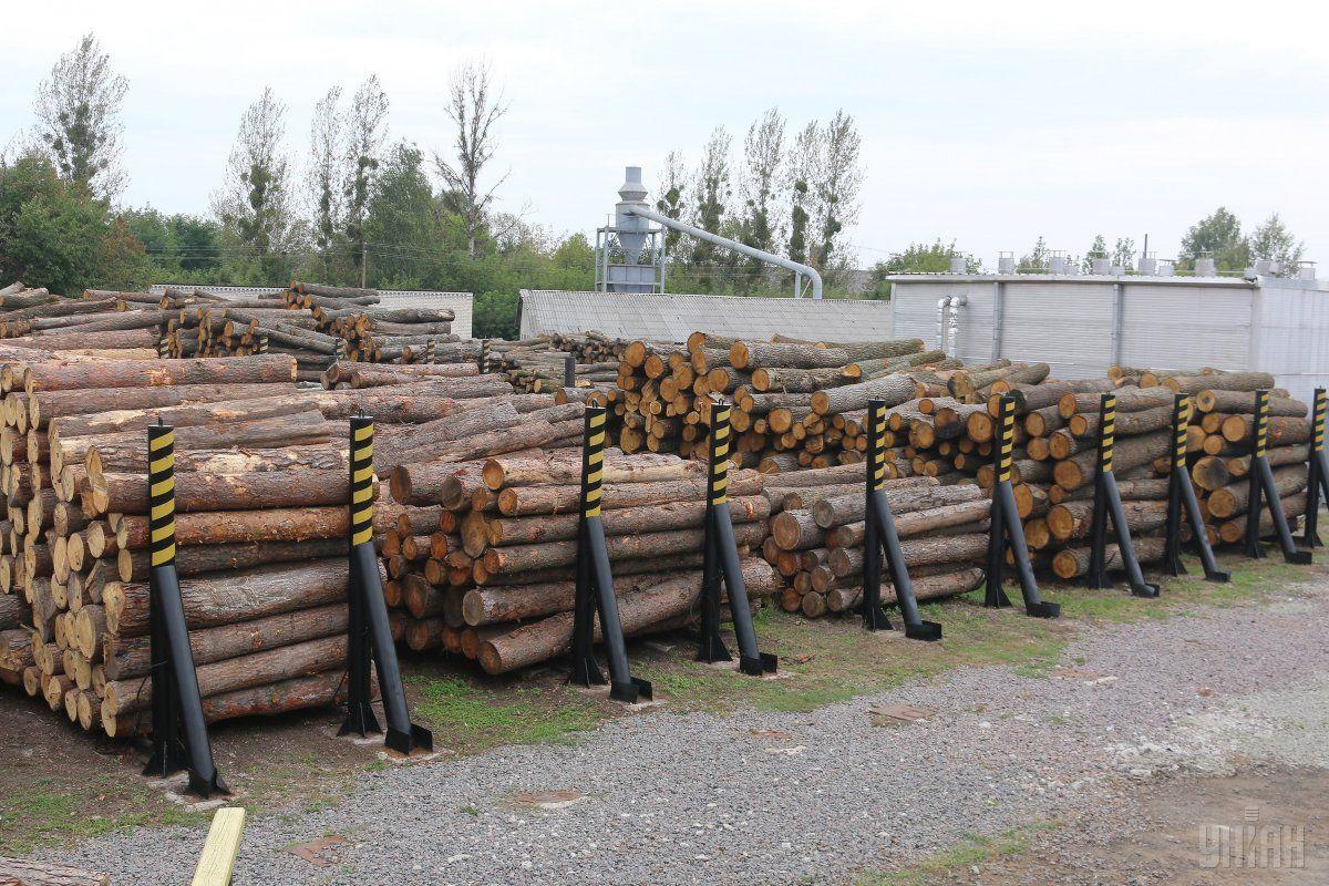 ДФС оприлюднить результати розслідувань фактів контрабанди лісу / фото УНІАН