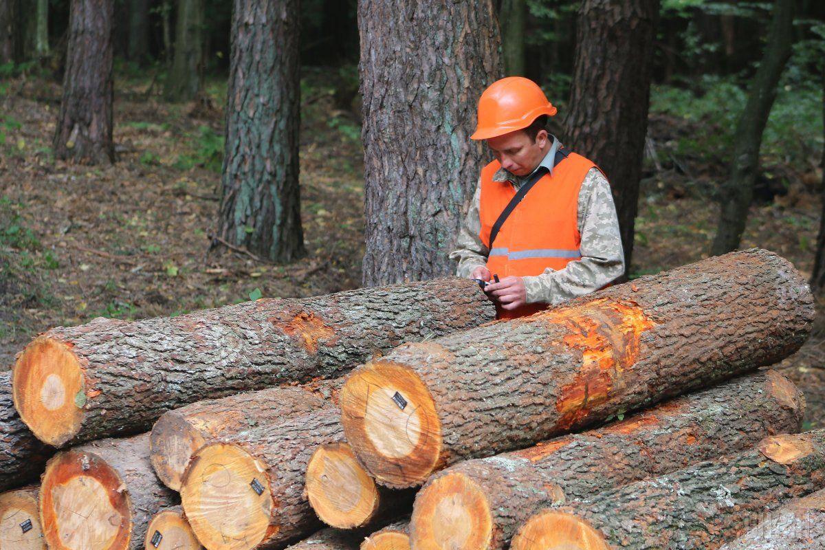 Кабмин создаст группы для аудита вырубки лесов / фото УНИАН
