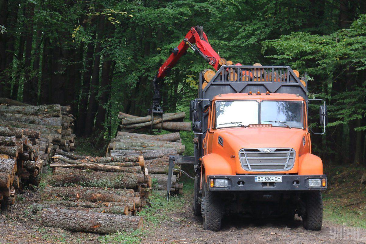 Порошенко предложил изменения к закону о контрабанде леса / фото УНИАН