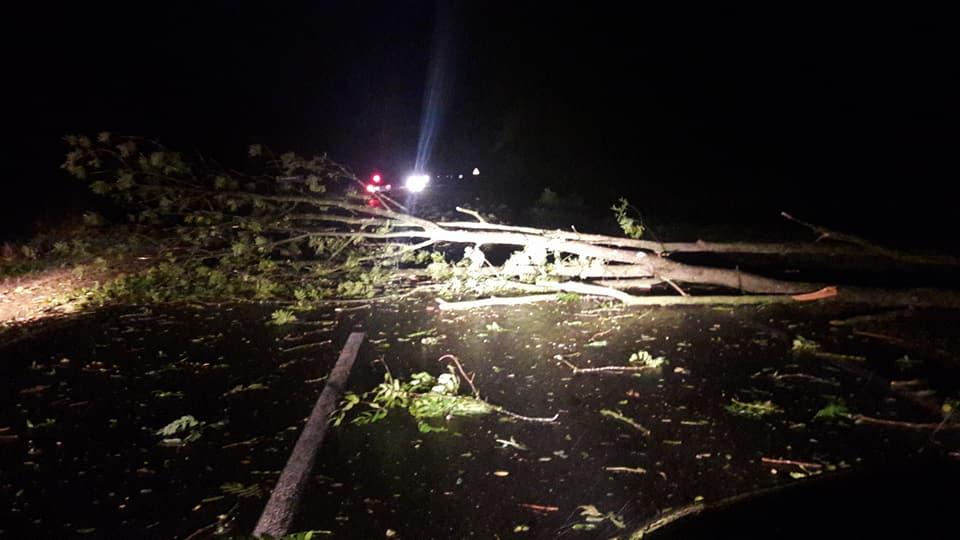 Внезапная буря повалила десятки деревьев по всей территории Черновцов / фото facebook/ЙосипівОлег