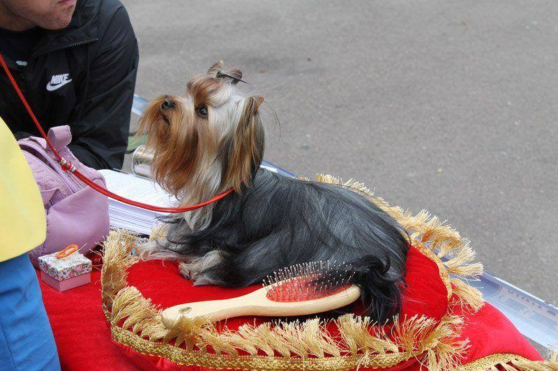 Виставка собак у Бердичеві / фото rio-berdychiv.info