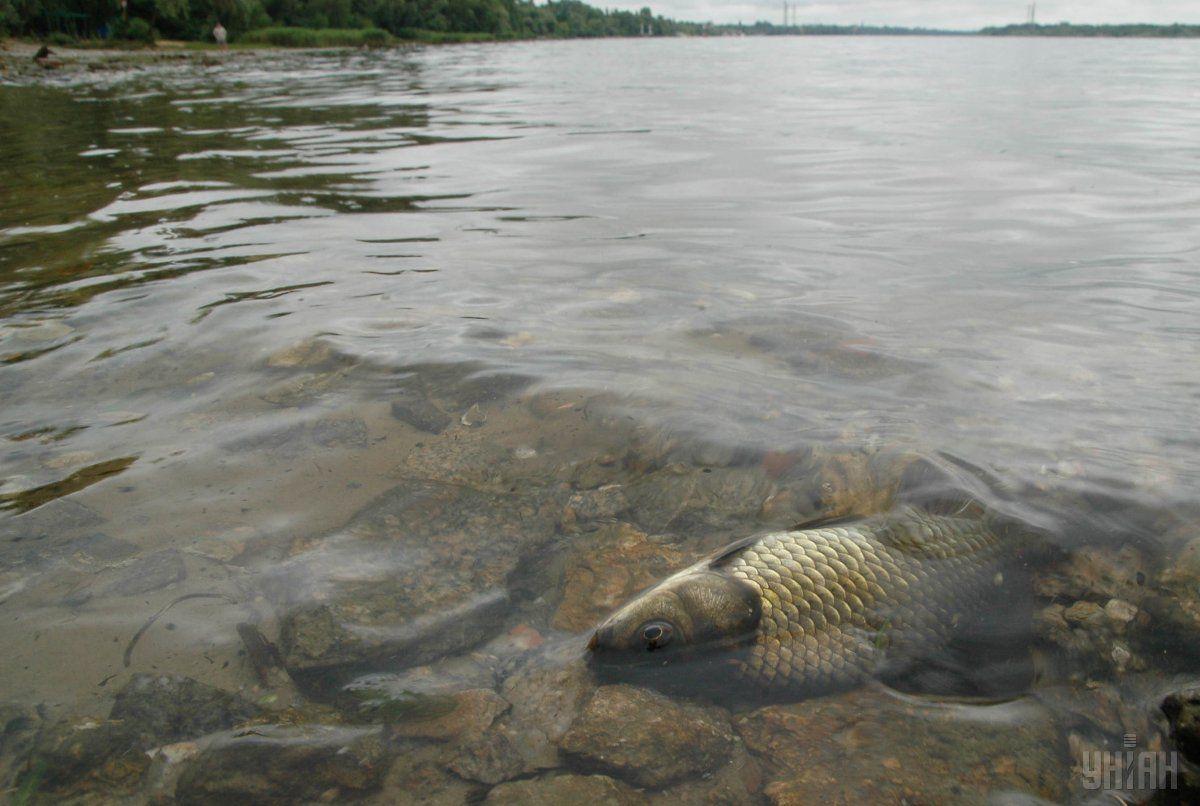 Замор риби стався у зв'язку з відсутністю водообміну між Азовським морем і Молочним лиманом / Фото УНІАН