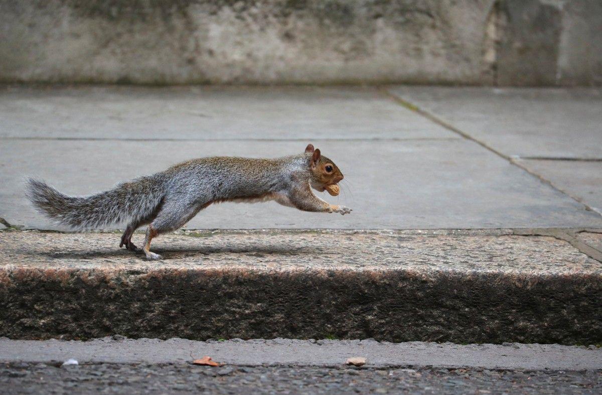 Наглая белка ворвалась на территорию главного правительственного кота Ларри / фото REUTERS
