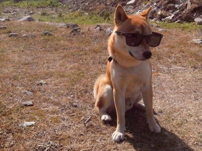 «Это фиаско, братан»: забавно свалившийся вреку пес подорвал сеть