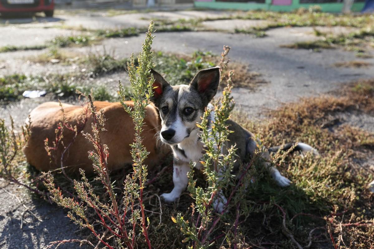 Собаки быстро привыкают к выгулу / фото УНИАН