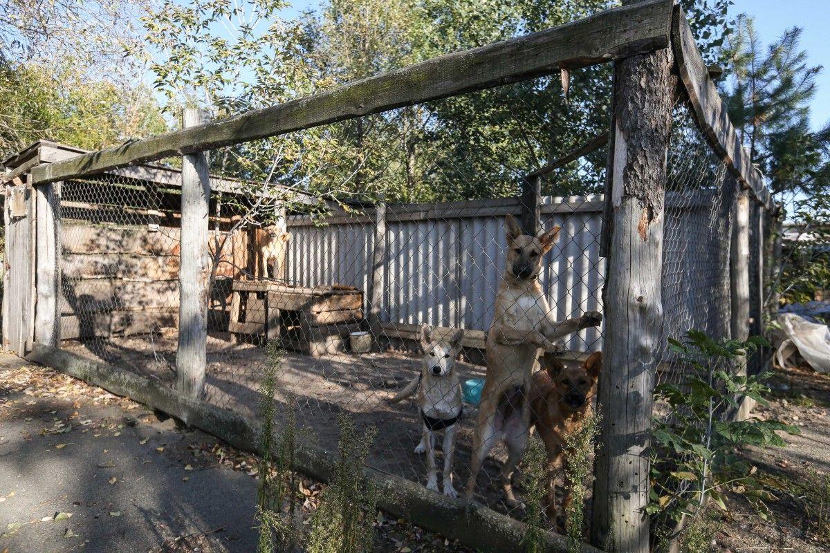 Обитатели приюта для собак