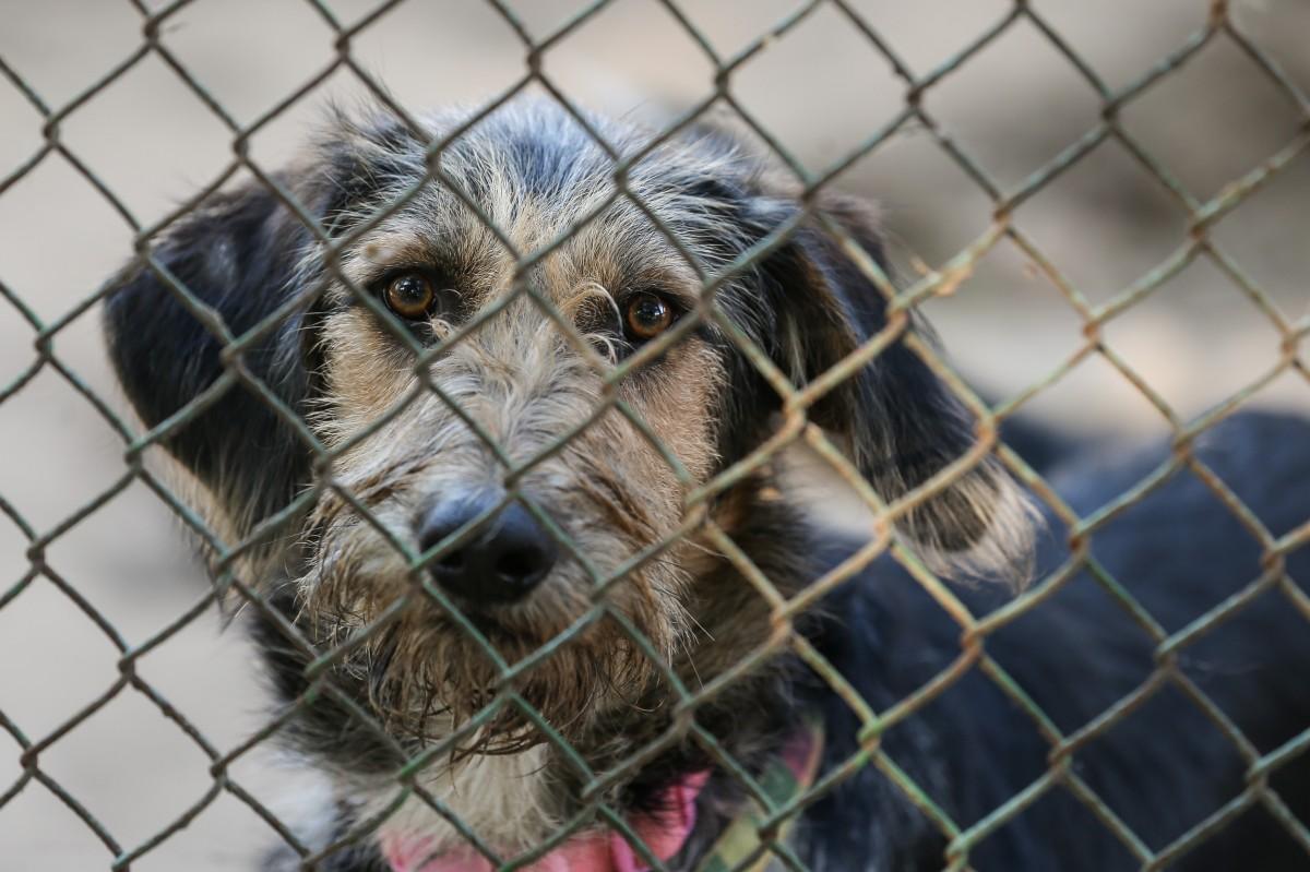 С собаками подозреваемый расправлялся особо жестоко с помощью топора, ножей и пилы/ фото УНИАН