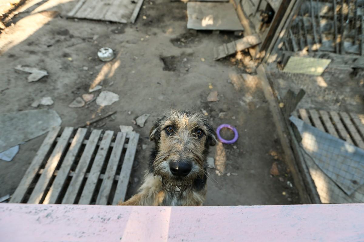 Кому-то собаки из приюта кажутся агрессивными, но это не так / фото УНИАН