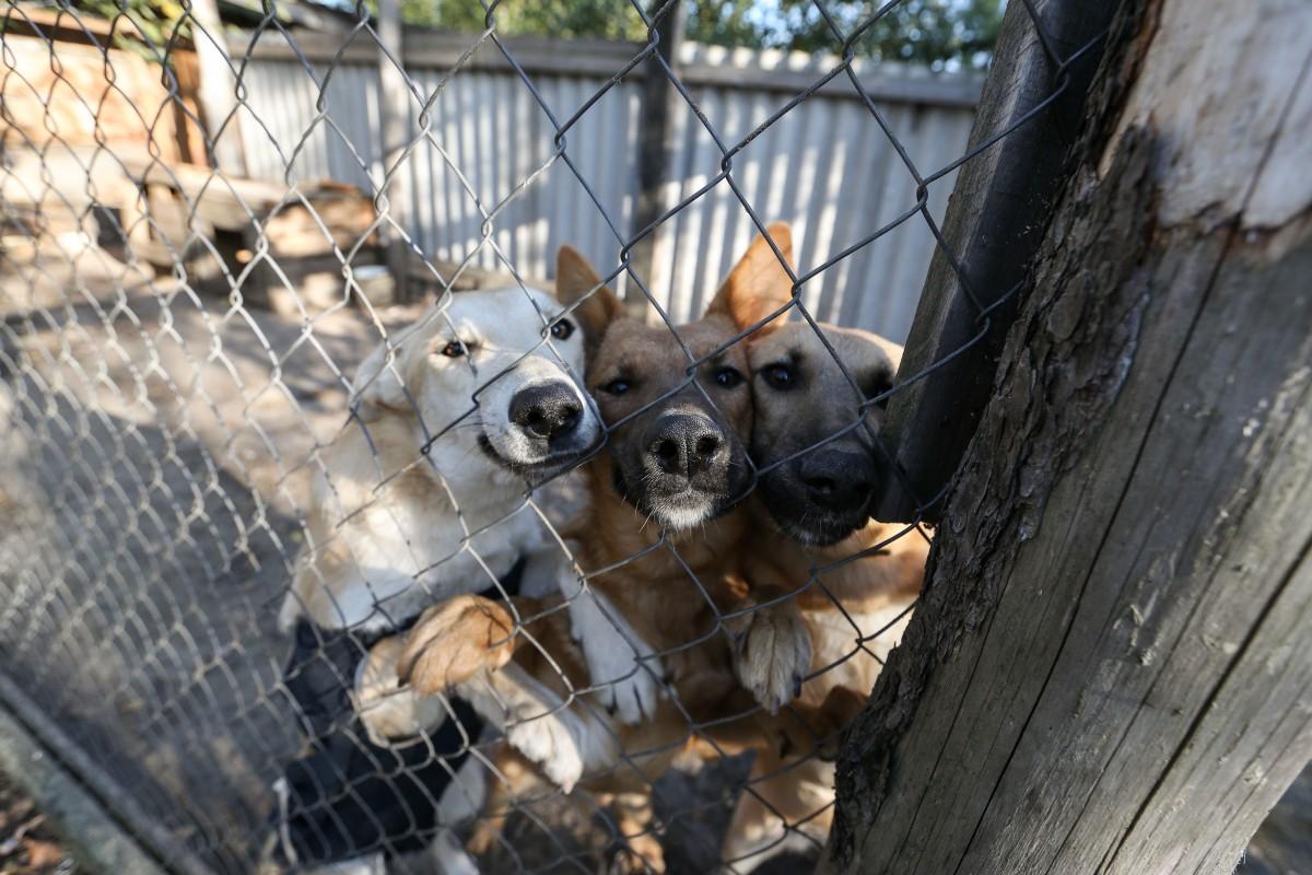 В приюте живут 160 собак / фото УНИАН