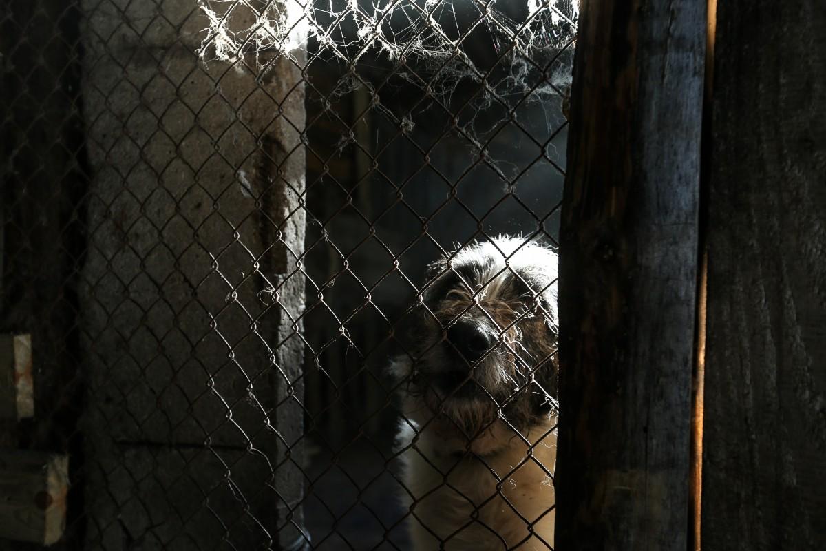 В Украине нет никакой регистрации домашних животных / фото УНИАН